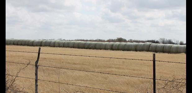 Round bales of hay near Carbon await transportation Saturday morning to drop offs in Amarillo for fire devastated counties in the Texas Panhandle. The transport is part of a volunteer project started by Bill Riley, owner of H & R Feed Store in Ranger, to deliver much needed hay for livestock feed to the disaster area. As word gets out, many have stepped up to support the mission with donations of hay, drivers, money for fuel, tires, pallets of water and more, Riley said.